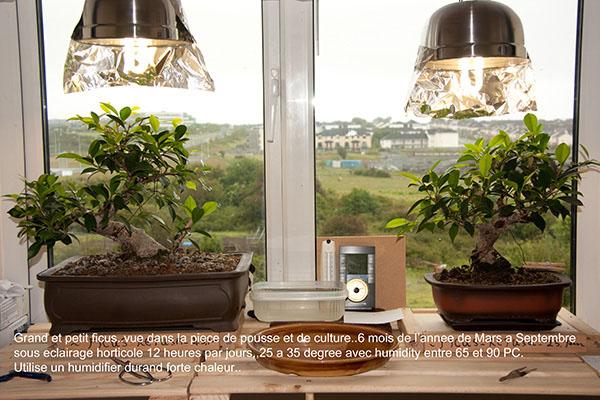 eclairage bonsai interieur
